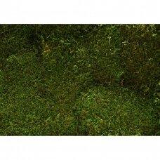 STALOLUOKTA FLATMOSS MOSS GREEN